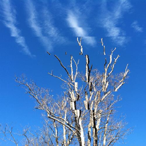 lowe_tree_500